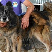 Adopt A Pet :: Archie - Oskaloosa, IA