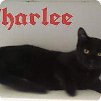 Adopt A Pet :: Charlee - Crown Point, IN