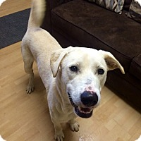 Adopt A Pet :: Q tip in CT - Manchester, CT