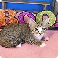 Adopt A Pet :: Pepper - Glendale, AZ