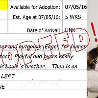 Adopt A Pet :: Theo - Flippin, AR
