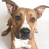 Adopt A Pet :: Molly - Redding, CA