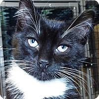 Adopt A Pet :: Flounder - Grants Pass, OR