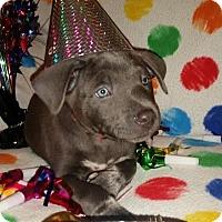 Adopt A Pet :: Champagne - Detroit, MI