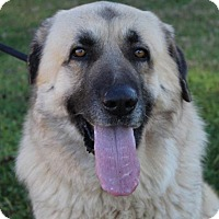 Adopt A Pet :: OZZY - Red Bluff, CA