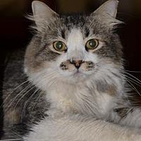 Adopt A Pet :: Jake - Glendale, AZ