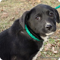 Adopt A Pet :: SASHA - PRINCETON, KY