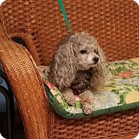 Adopt A Pet :: Harley - Tulsa, OK