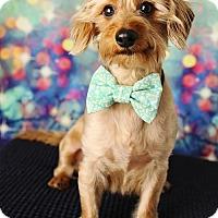 Adopt A Pet :: Charlie - Nashville, TN