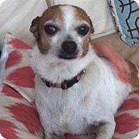 Adopt A Pet :: Mr. Peanut - Los Angeles, CA