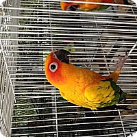 Adopt A Pet :: Sunny - Punta Gorda, FL