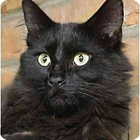 Adopt A Pet :: Kahlua - Chesapeake, VA