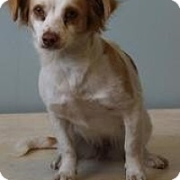 Adopt A Pet :: Tessie Mae - Shawnee Mission, KS