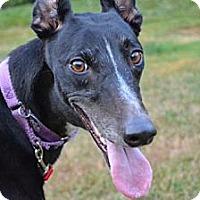 Adopt A Pet :: Tina (Lenny's Martina) - Chagrin Falls, OH