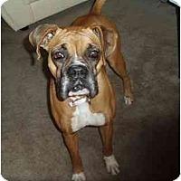 Adopt A Pet :: Caleigh - Savannah, GA