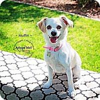 Adopt A Pet :: Muffins - Scottsdale, AZ