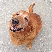 Adopt A Pet :: Bessie - Foster, RI