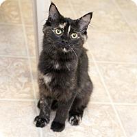 Adopt A Pet :: Pretzel - Shelton, WA