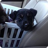 Adopt A Pet :: Robin - Saskatoon, SK