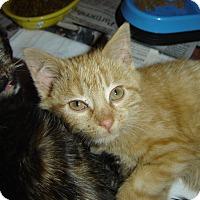 Adopt A Pet :: Howie - Mundelein, IL
