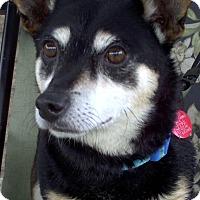 Adopt A Pet :: Sammy 2015 (m/c) - Chesterfield, MI
