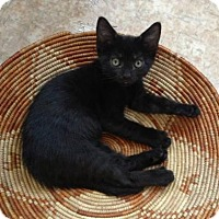 Adopt A Pet :: OLIVE - Ridgewood, NY