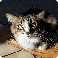 Adopt A Pet :: zz 'Tama' courtesy post - Cincinnati, OH