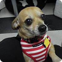 Adopt A Pet :: PEPITA (Deb KW) - Tampa, FL