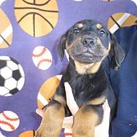Adopt A Pet :: Tango - Oviedo, FL