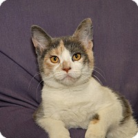 Adopt A Pet :: Tristy - Red Wing, MN