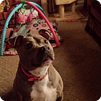 Adopt A Pet :: Dixie-Courtesy Post - Alpharetta, GA