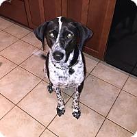 Adopt A Pet :: Allie - Manhasset, NY