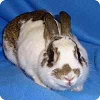 Adopt A Pet :: Annie - Woburn, MA
