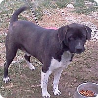 Adopt A Pet :: Oscar - Courtesy  Listing - Rootstown, OH