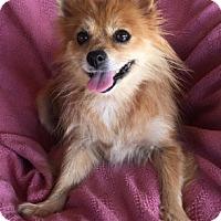 Adopt A Pet :: Sabrina - Temecula, CA