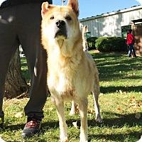 Adopt A Pet :: Andy - Elyria, OH