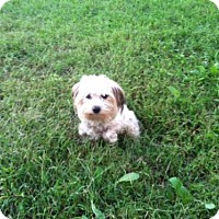 Adopt A Pet :: Lil Girl - Willingboro, NJ