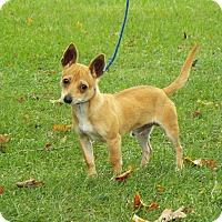 Adopt A Pet :: Ellio - Shelby, MI
