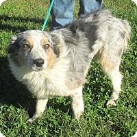 Adopt A Pet :: Sadie - Reeds Spring, MO