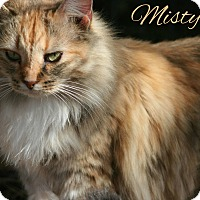 Adopt A Pet :: Misty - Columbia, TN