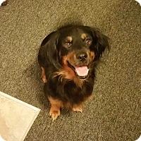 Adopt A Pet :: Bear - Orange Park, FL