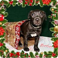 Adopt A Pet :: Edna - Bradenton, FL