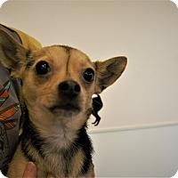 Adopt A Pet :: Hurley - Seattle, WA