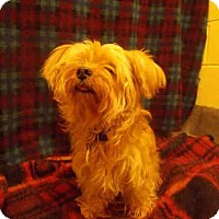 Adopt A Pet :: CHLOE - Upper Marlboro, MD