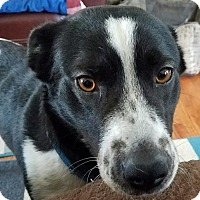 Adopt A Pet :: Sasha - Richmond, VA