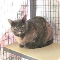 Adopt A Pet :: Eloise - Phoenix, AZ