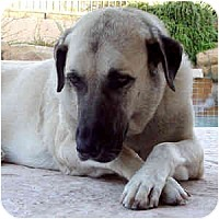 Adopt A Pet :: Merlin - Phoenix, AZ