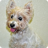 Adopt A Pet :: Daisy Mae - Port Washington, NY