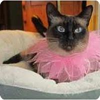 Adopt A Pet :: Macie - Arlington, VA