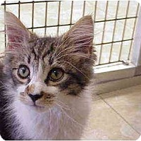 Adopt A Pet :: Bimini Cricket - Deerfield Beach, FL